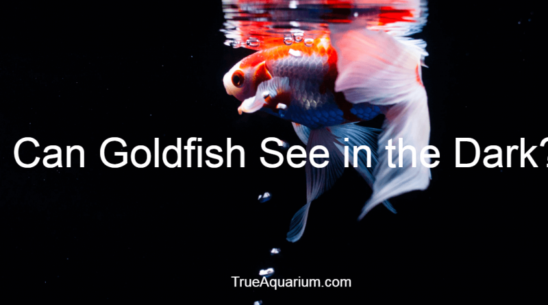 Can Goldfish See in the Dark?