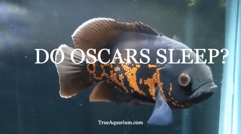 DO OSCARS SLEEP?