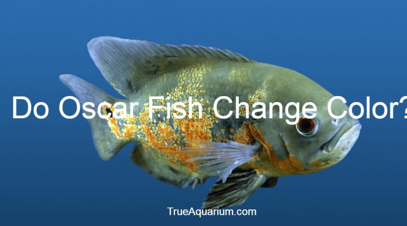 Do Oscar fish change color