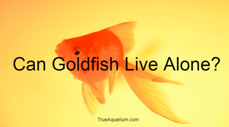 Can Goldfish Live Alone?