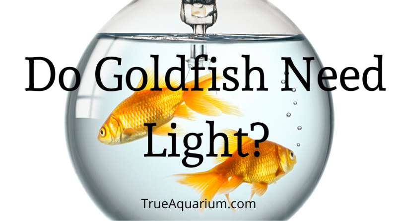 Do Goldfish Need Light?