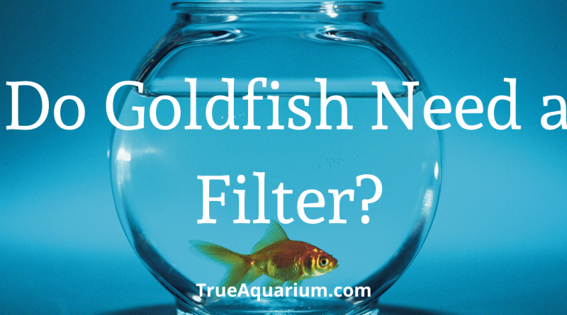 Do Goldfish Need a Filter