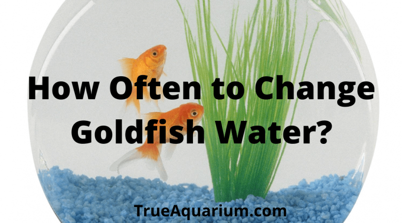 How Often to Change Goldfish Water
