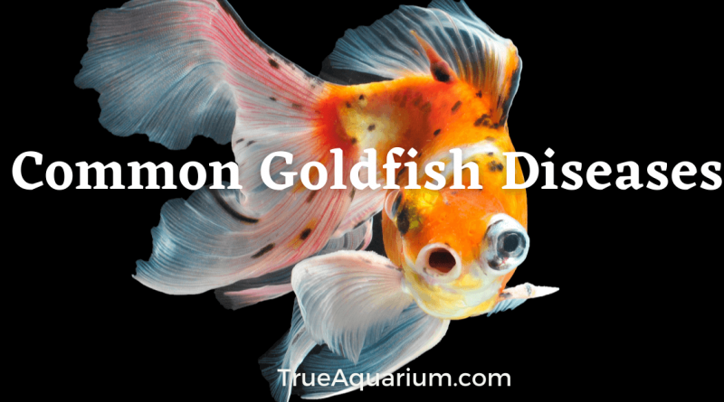 Common Goldfish Diseases – Causes, Symptoms and Treatments