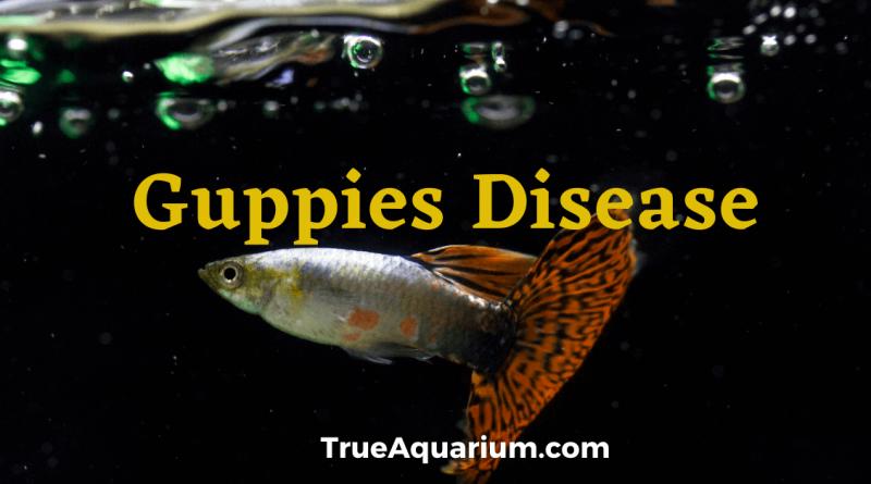 Guppies Disease