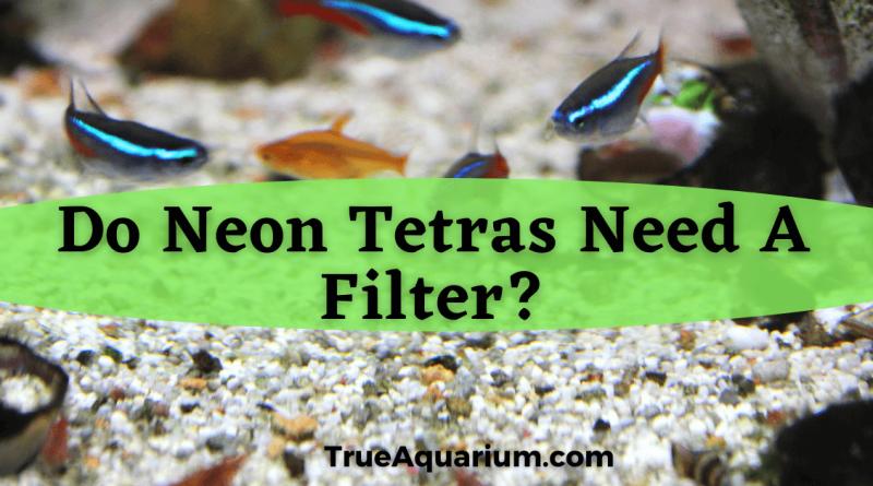 Do Neon Tetras Need A Filter