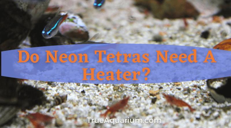 Do Neon Tetras Need A Heater