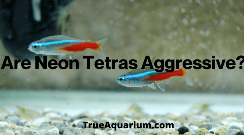Are Neon Tetras Aggressive?