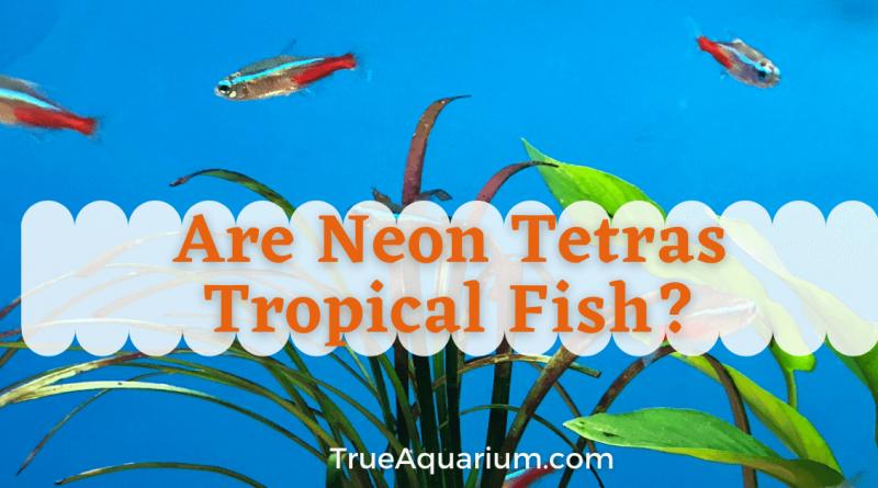 Are Neon Tetras Tropical Fish