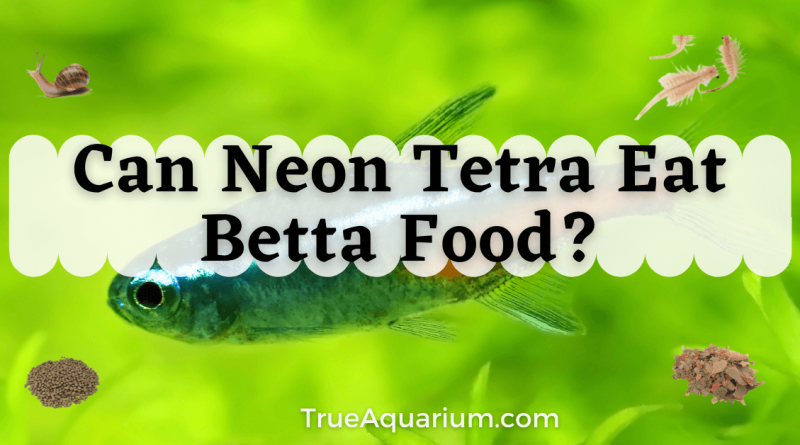 Can Neon Tetra Eat Betta Food?