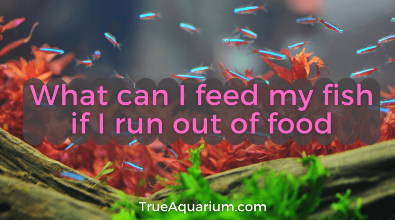 What can I feed my fish if I run out of food